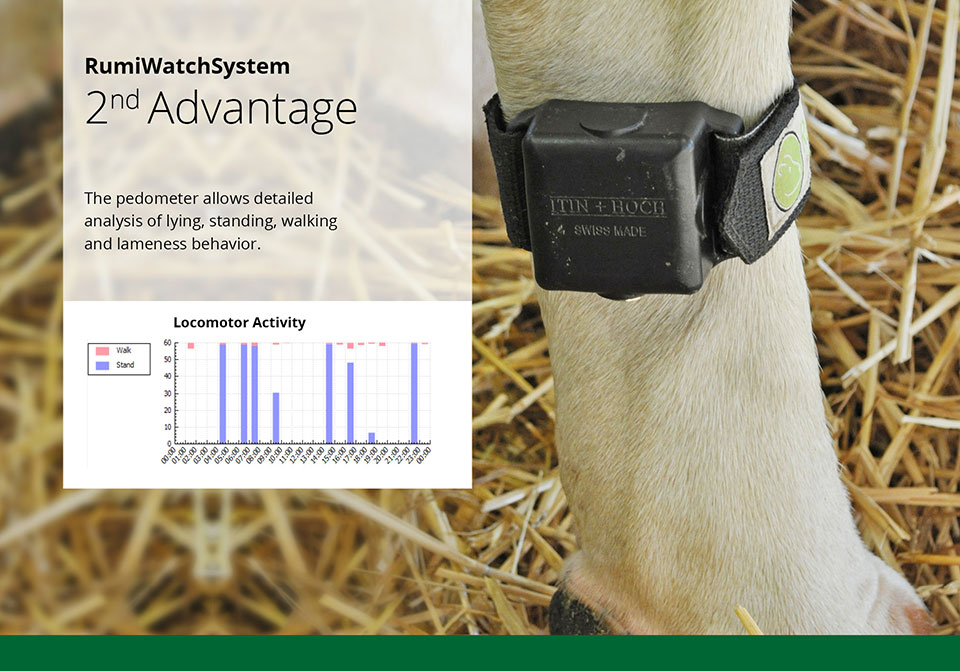 Pedometer - detailed analysis for ruminants